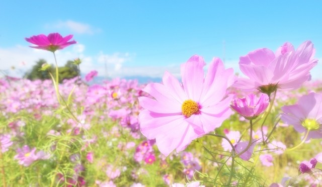 SMAP解散騒動に見る『レールを外れる』ということ3 ~本当の意味でSMAPが『世界に一つだけの花』になるには、独立しかない!?~
