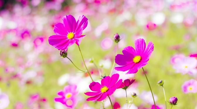 【おすすめ】武田双雲氏のメルマガ登録してみた ~他の花になろうとせず 自分の根っこに水を~